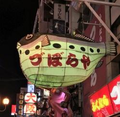 Giant fugu (puffer fish)