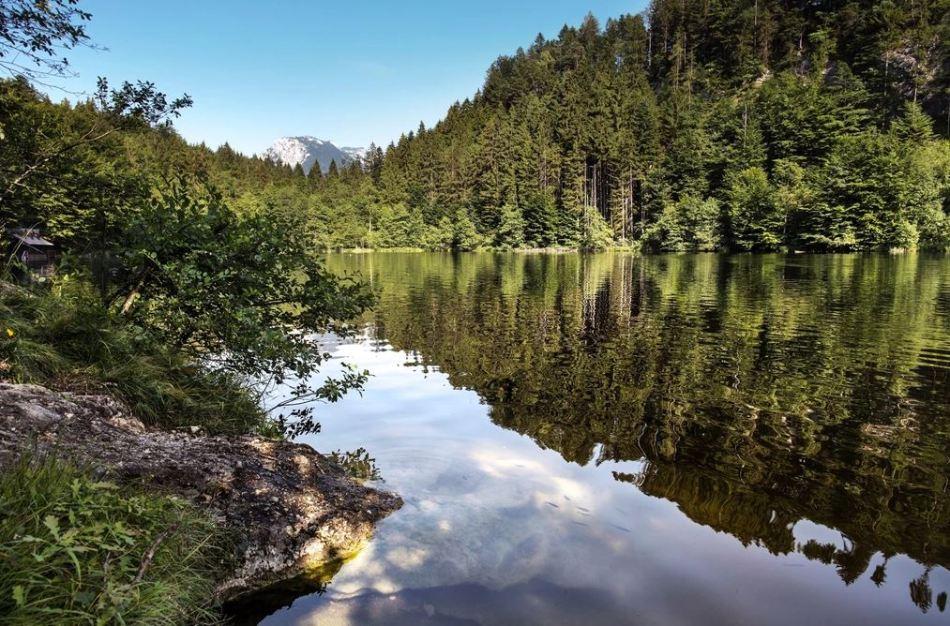 Wildromantischer Waldsee- der Längsee