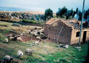 Peruvian home.
