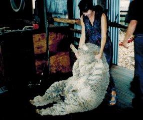 Perth Yallingup shearing shed