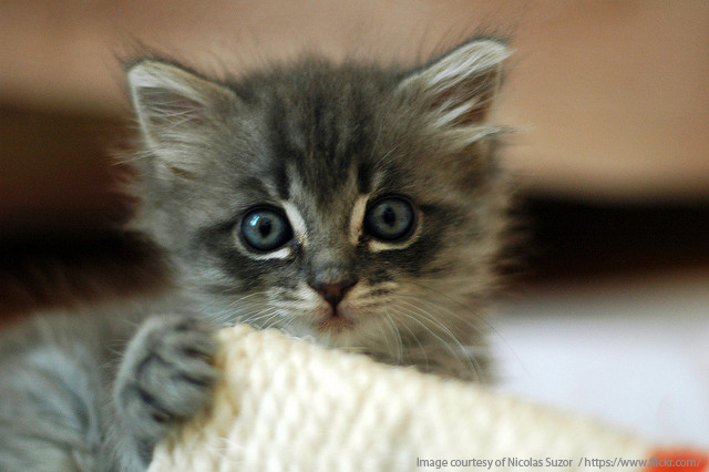 Kattenavn til hannkatt - Kattenavn