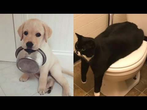 , 1584331361 Baby Animals Funny Cats and Dogs Videos Compilation 2020.jpg?resize=480%2C360&ssl=1