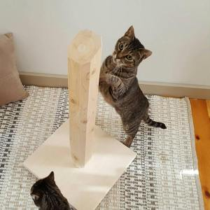 gratis kitten krabpaal