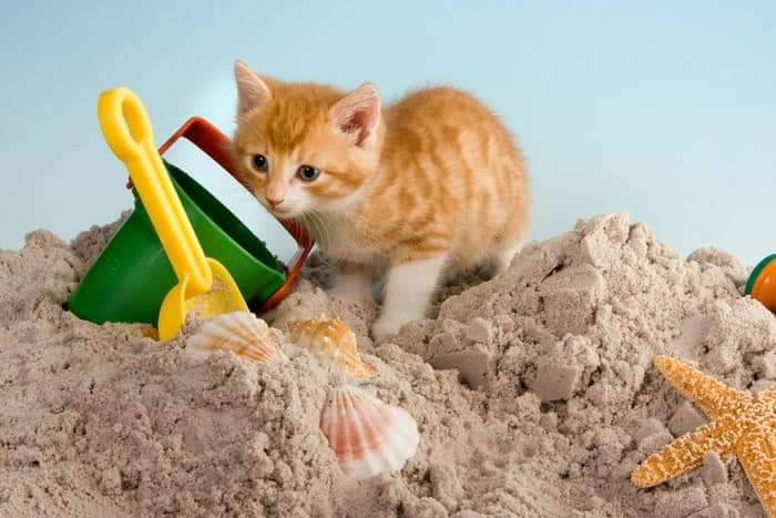 Hoe bescherm je je kat tegen de warmte