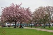 WTT Blossom (6)