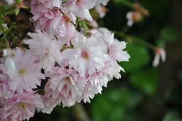 WTT Blossom (7)