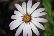 Flower Power (8)