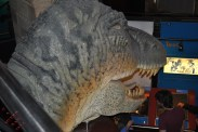 T-Rex head from the back
