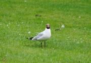 Watch The Birdie (4)