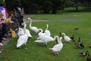Watch The Birdie (5)