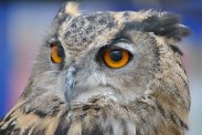 Owl Be Seeing You (5)