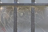 Ducking The Web (9)