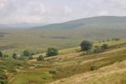 Landscapes (6)