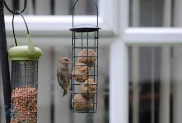 July Birds (6)