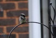 July Birds (7)