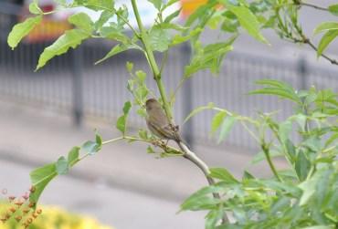June Birds (1)