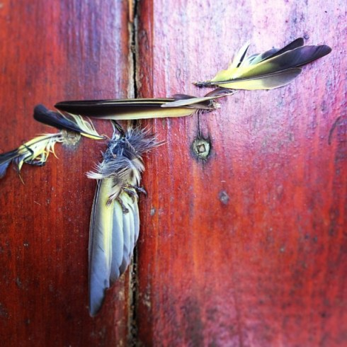 """""""Not a whole dead bird but enough evidence to open a case file."""" - Darcy.  Photo by Darcy"""