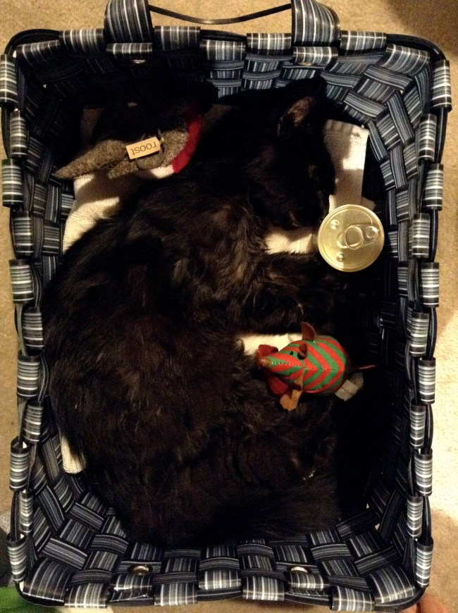 After he passed, we placed him in the basket he loved to snooze in, with his favorite things- a can of Fancy Feast, a stuffed bird, a catnip mouse, a fresh chicken bone and a vial of shower water.