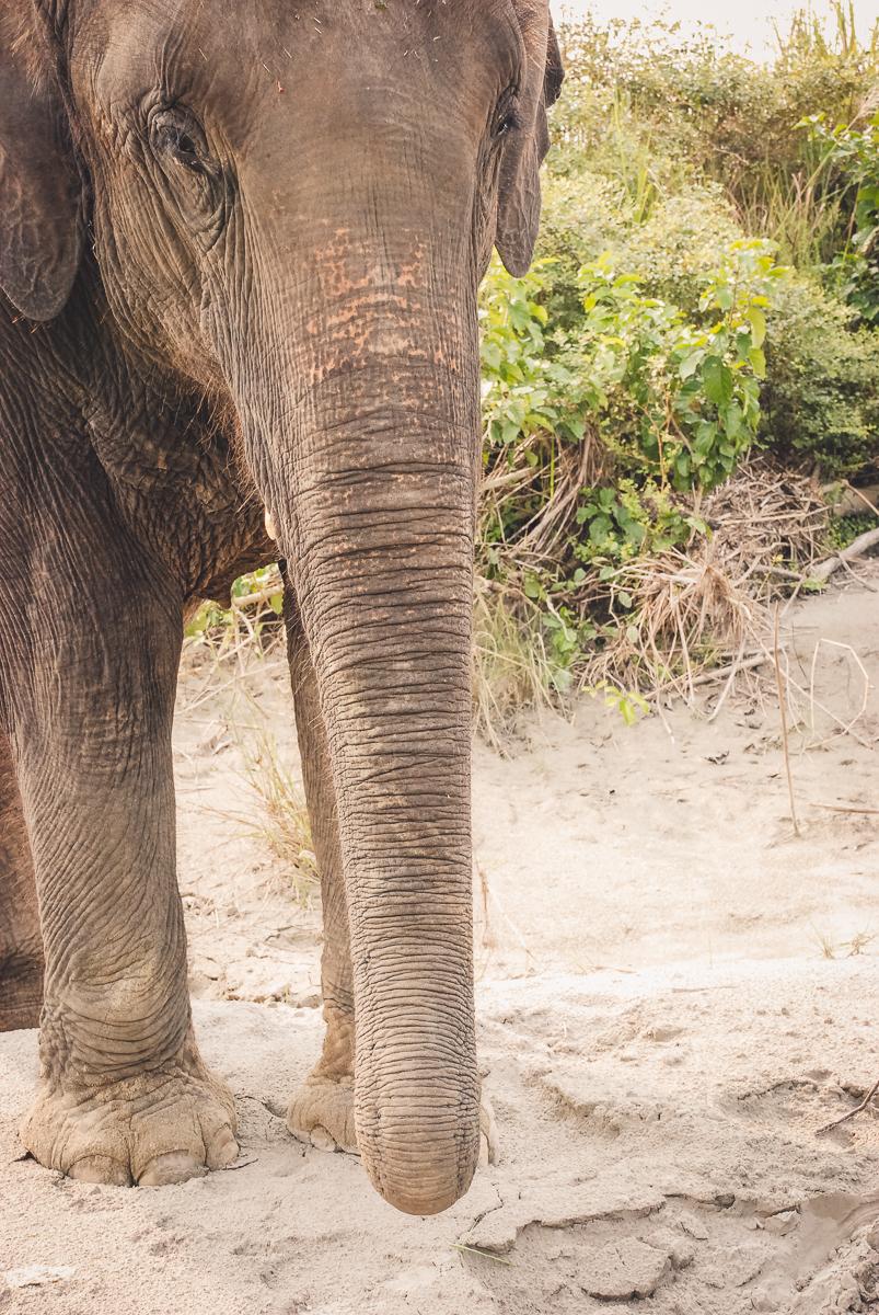 elefanti al Parco Nazionale di Bardia in Nepal