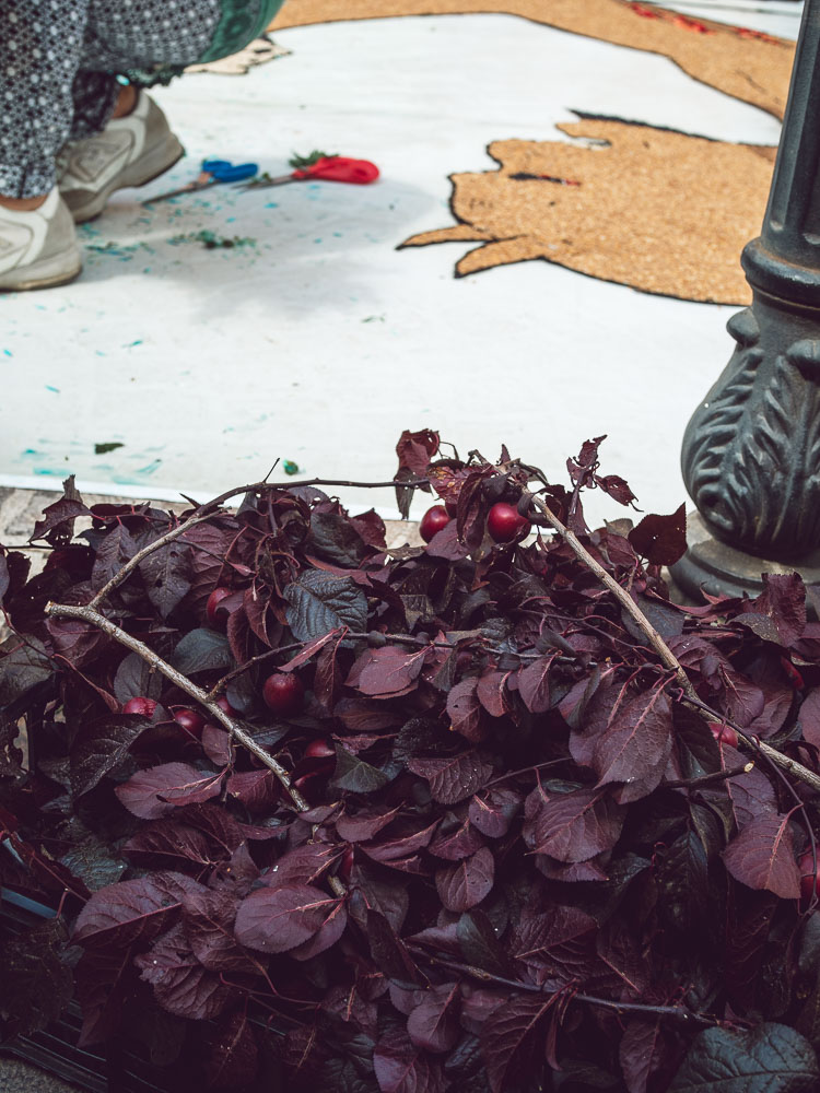 leaves used for the infiorata in bolsena