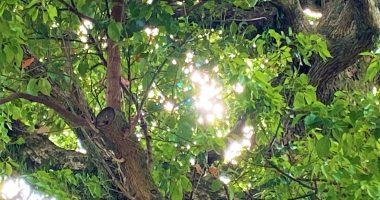 楠木の漏れ陽