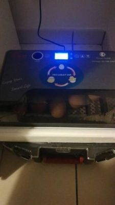 Ubator 12Hatcher Automatic Egg Incubator photo review