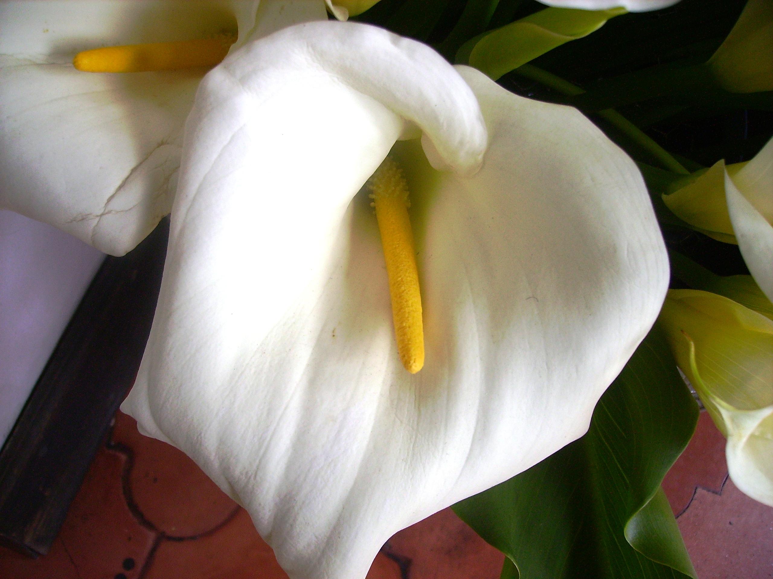 flower in Guatemala