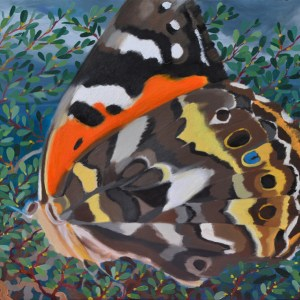 Oil Painting of Australian Painted Lady at Phillip Island