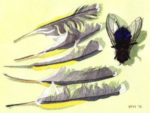 Framed Watercolour: Bluebottle and Finch Feathers