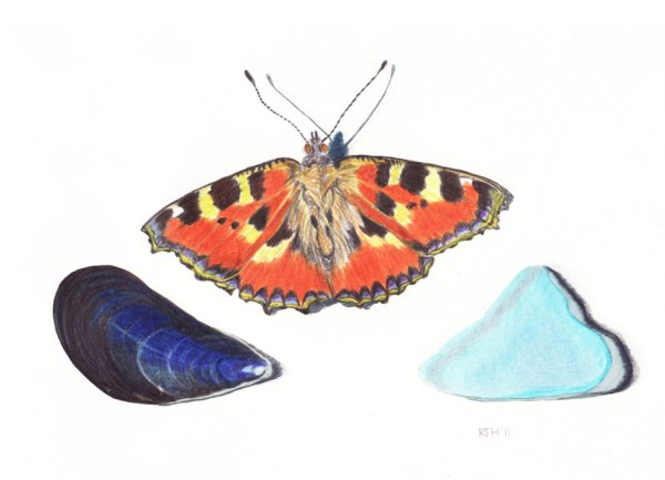 Framed Colour Drawing: Tortoiseshell Butterfly and Beach Bits