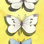 Graphite Drawing and Watercolour Painting: Butterflies: Wood White, Small White, Common Blue