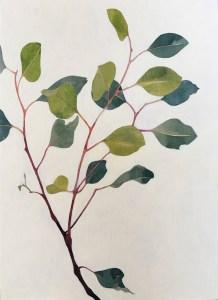Eucalyptus Sprig Acrylic Ink on Board