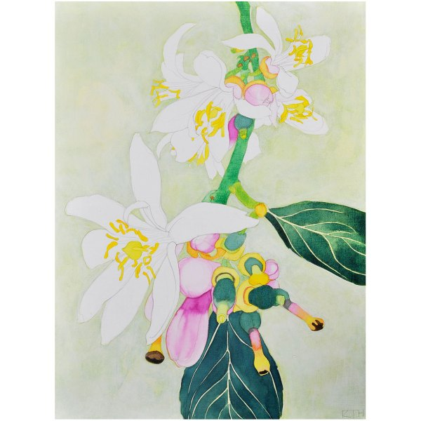 Lemon Blossom acrylic ink on board by Katy Hood