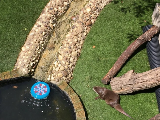 Sealife Adventure Southend - A look at the new Otter enclosure