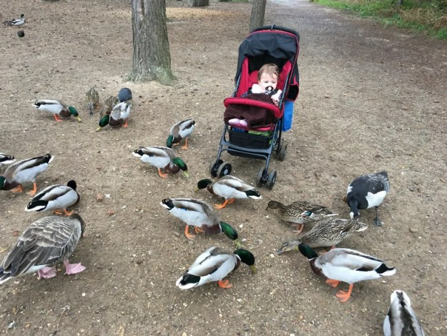 What to pack for centerparcs - Daisy feeding the animals