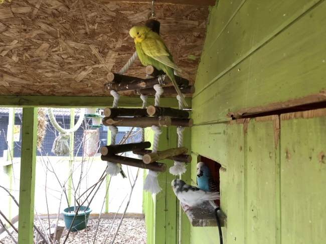 Lee Valley Park Farms - Budgies