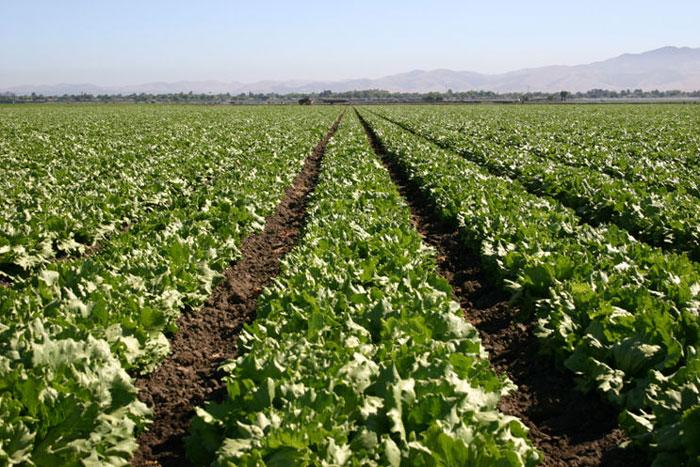About Us Hacienda Farm Services
