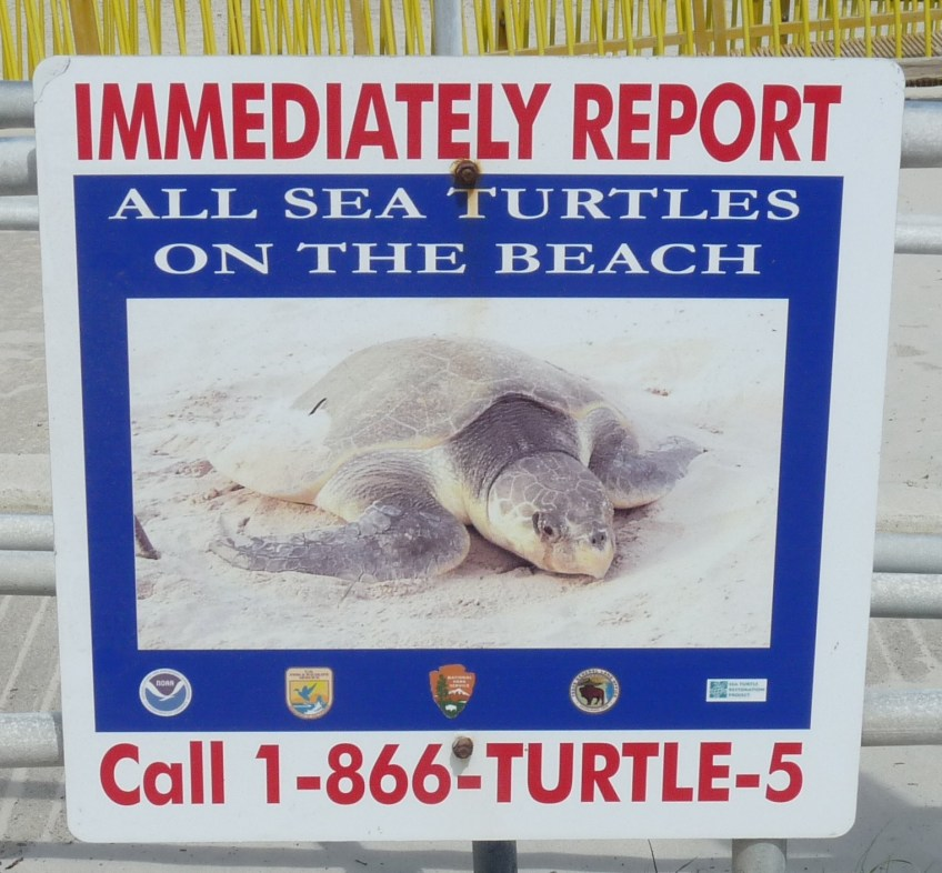 071 TX report all sea turtles-KP