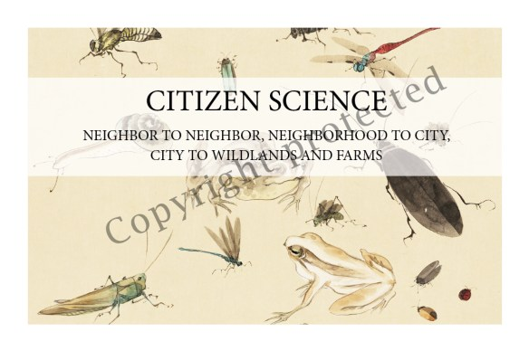 I Spy! Who's Using My Garden? Citizen Sci sample