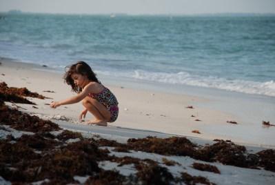 Ruby Seaweed