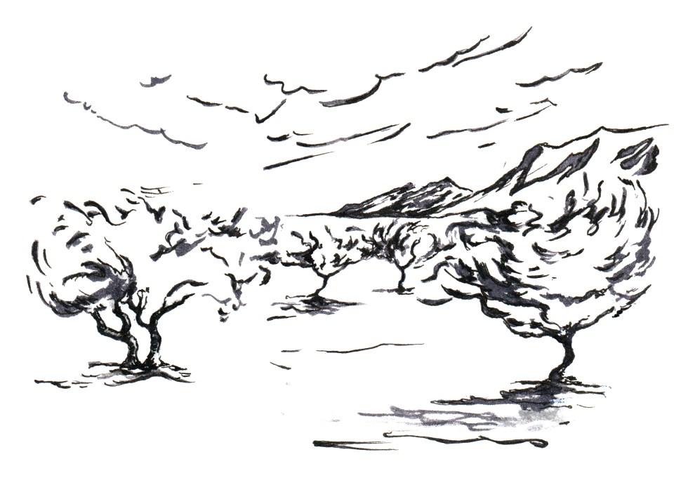 olive trees sky