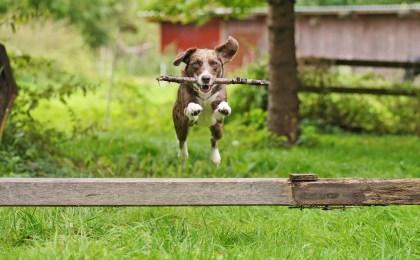 Die meisten Hunde sind geliebte Familienmitglieder, trotzdem kann auch die fröhlichste Fellnase zum Risiko werden.