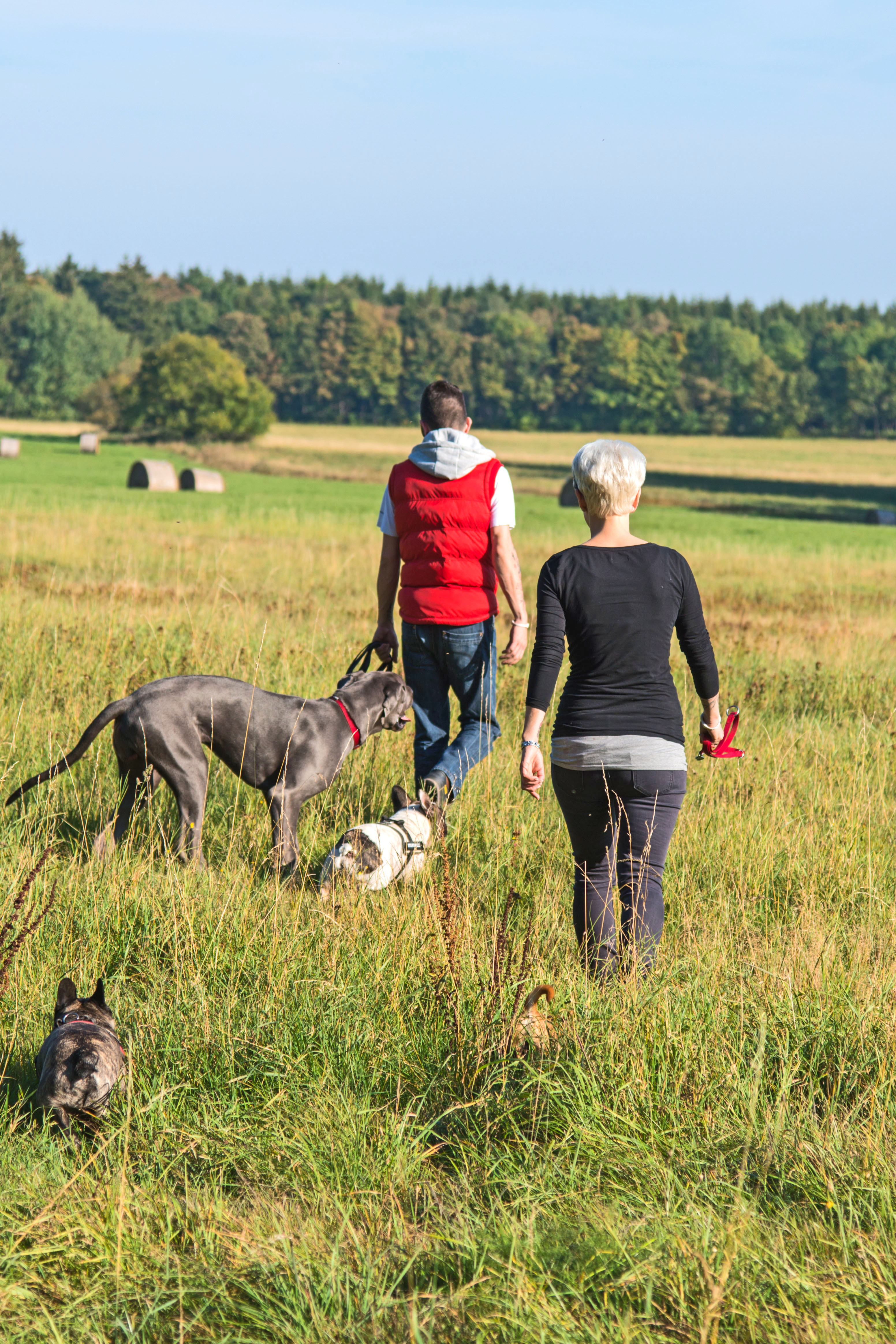 Wiesen, Felder und Flüsse laden Mensch und Tier im Oberharz zu ausgedehnten Spaziergängen ein.