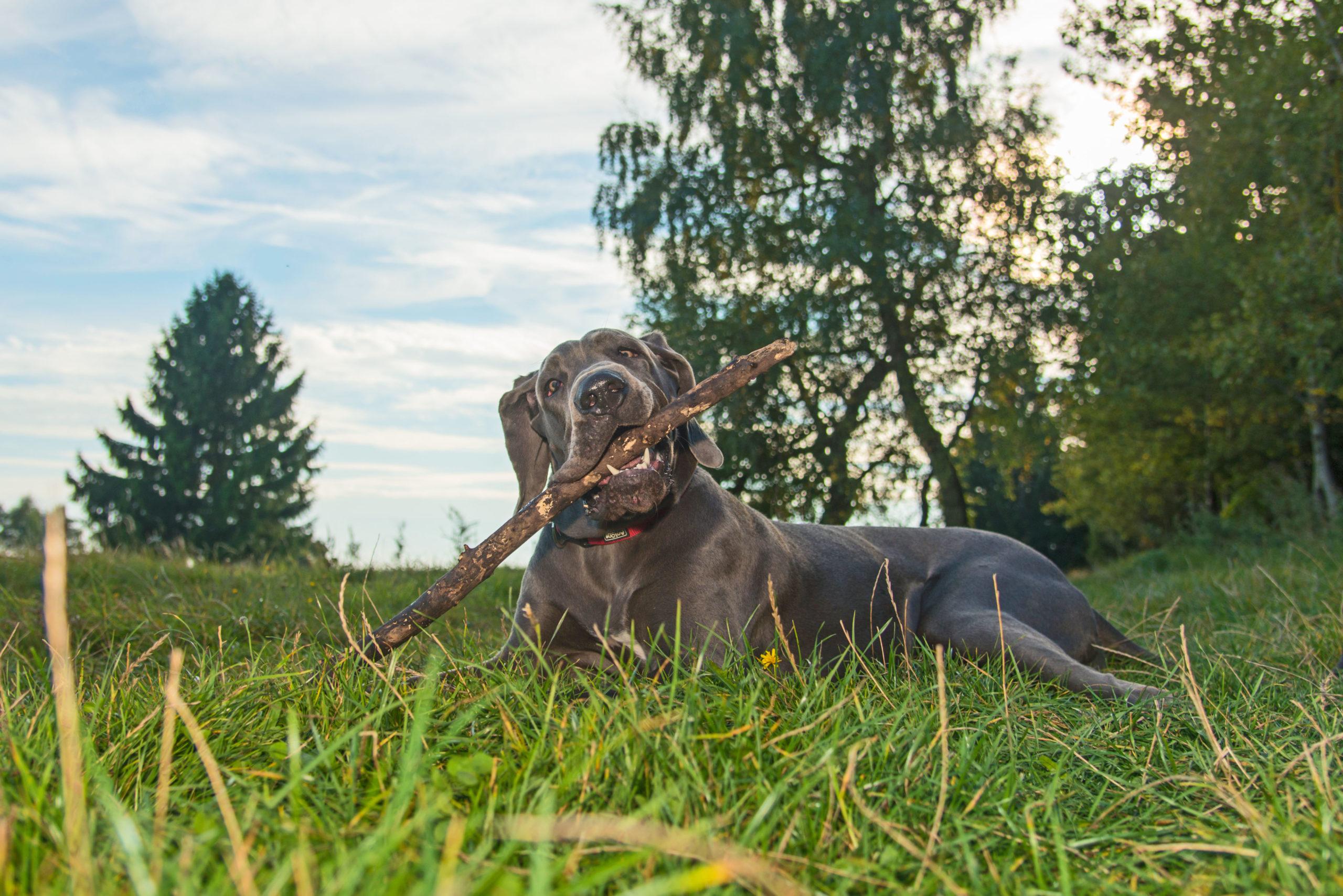 Unbeschwerte Urlaubstage mit dem Hund