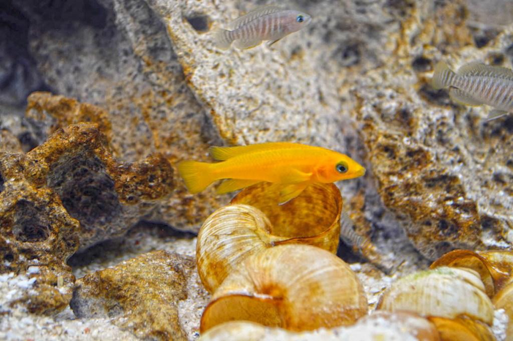 Bunt schillernde Unterwasserwelt: Ist das Aquarium richtig eingerichtet, fühlen sich die Fische wohl - Aquaristik