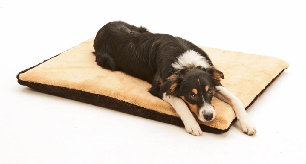 Eine Hundedecke sollte immer mindestens so lang sein, dass der Vierbeiner ausgestreckt darauf liegen kann.