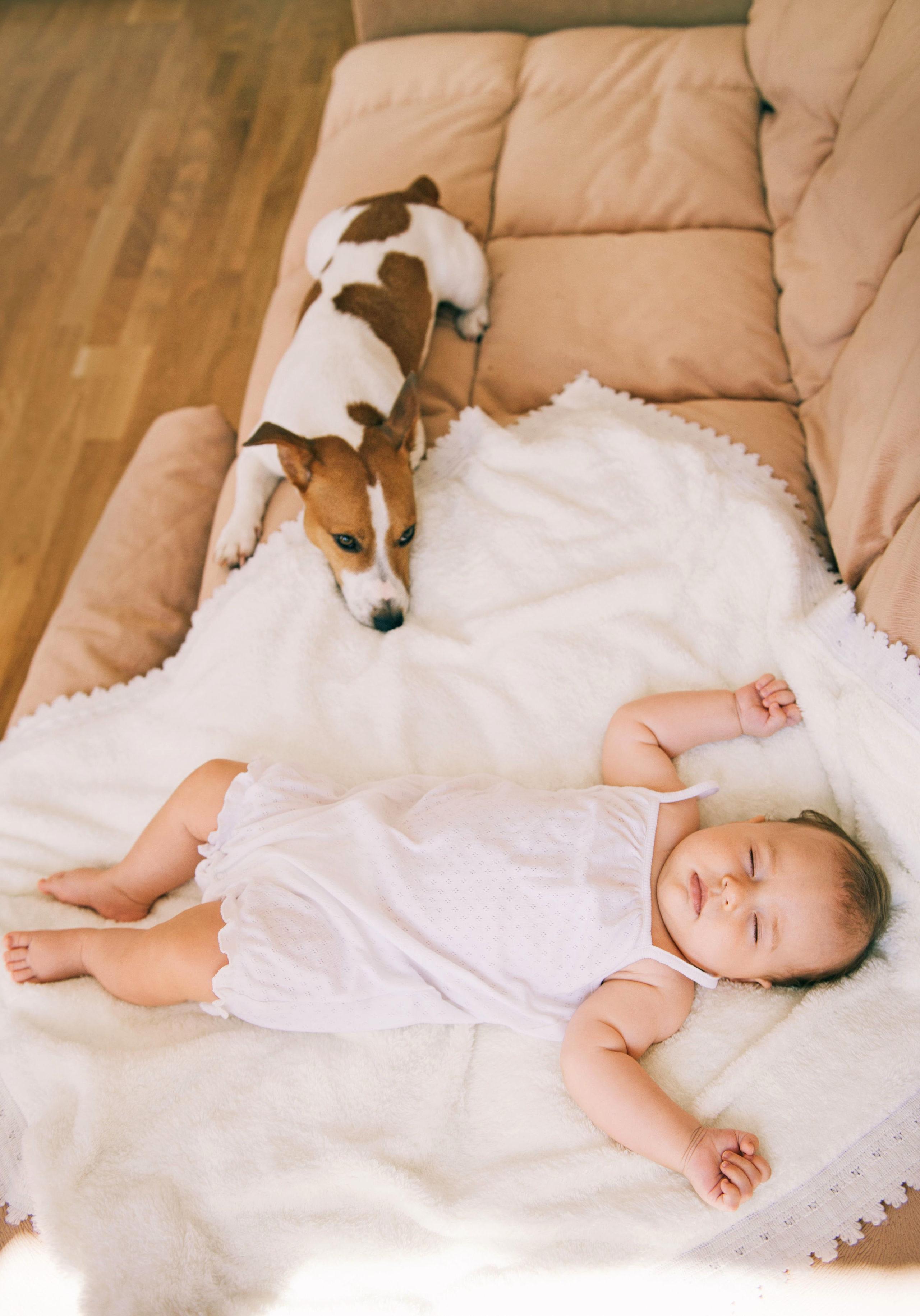 Hat der Hund sich erst einmal an das neue Familienmitglied gewöhnt, gehört es ganz selbstverständlich zum Rudel dazu.