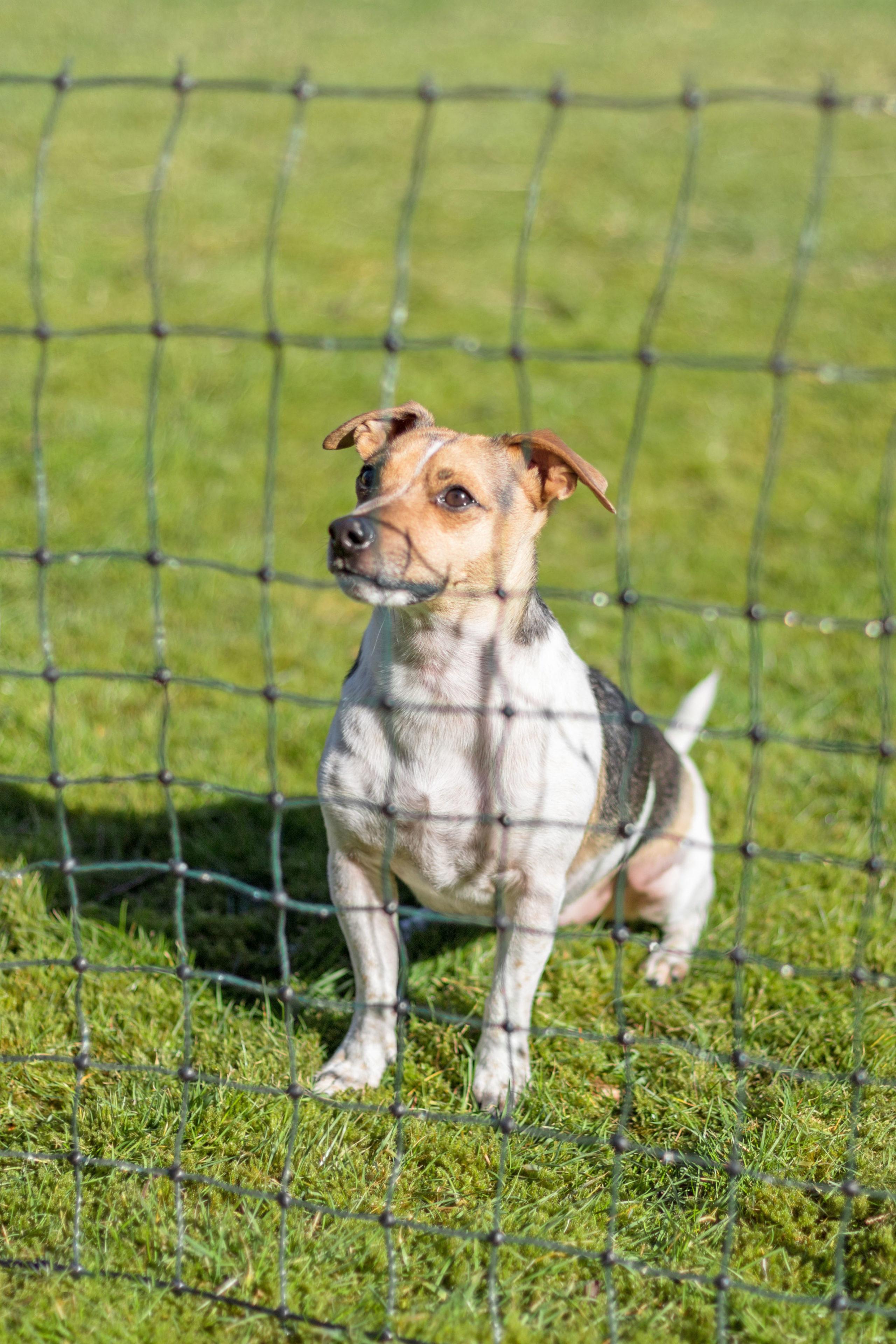 Auslauf ohne Gefahren. Schutzzäune verhindern, dass das Haustier das Grundstück verlässt.