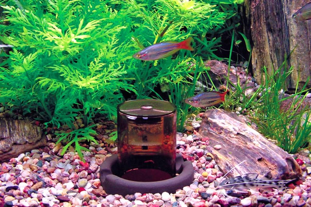 Herrscht im Aquarium stets frischer Sauerstoff vor, fühlen sich Fische und Pflanzen rundum wohl. Algen haben keine Chance.