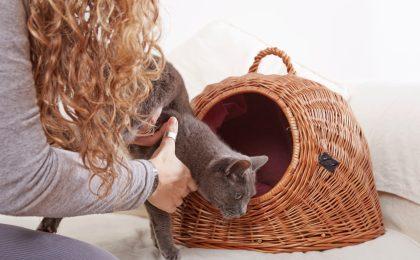 Mit der richtigen Vorbereitung kann man der Katze helfen, die Transportbox stressfrei und ohne Angst zu akzeptieren.